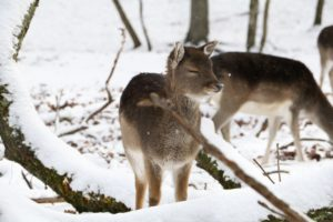 Erecting Barriers Around Trees Can Help Prevent Damage From Deer During the Winter