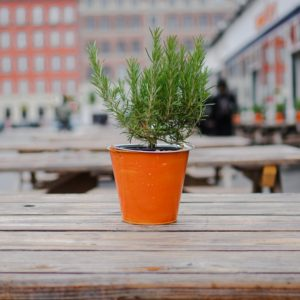 Colorful Planter with Evergreen. Photo by Francisco Delgato